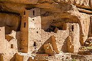 Cliff Palace, the largest cliff dwelling in North America, was built 1190-1260 CE by Ancestral Puebloans on Chapin Mesa, in what is now Mesa Verde National Park, in Colorado, Southwestern USA. Cliff Palace was rediscovered in 1888 by Richard Wetherill and Charlie Mason while looking for stray cattle. Mesa Verde National Park is a UNESCO World Heritage Site in Montezuma County. The park was established by Congress and President Theodore Roosevelt in 1906 near the Four Corners region. Starting around 7500 BCE, Mesa Verde was seasonally inhabited by nomadic Paleo-Indians. Later, Archaic people established semi-permanent rockshelters in and around the mesa. By 1000 BCE, the Basketmaker culture emerged from the local Archaic population, and by 750 CE the Ancestral Puebloans had developed from the Basketmaker culture. The Mesa Verdeans survived using a combination of hunting, gathering, and subsistence farming of crops such as corn, beans, and squash. They built the mesa's first pueblos sometime after 650, and by the end of the 1100s began building massive cliff dwellings. By 1285, following a period of social and environmental instability driven by a series of severe and prolonged droughts, they abandoned the area and moved south into what is today Arizona and New Mexico.