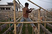 A boy hangs fish to dry on racks on the shores of the Karnaphuli River, Chittagong, Bangladesh