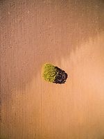 Aerial view of a single tree standing on the middle of raw soil, Netherlands.