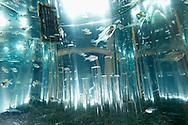 "USA, Vereinigte Staaten Von Amerika: Florida Aquarium, Glasfische (Parapriacanthus) in abstraktem Kleinaquarium mit Glasstaeben, Galerie ""Aquariumainia"", Tampa, Florida | USA, United States Of America: Florida Aquarium, Sweepers (Parapriacanthus) in an abstract aquarium with glass poles, gallery ""Aquariumainia"", Tampa, Florida |"