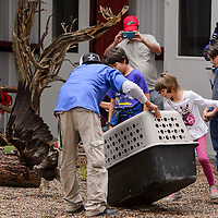 Employees release an eagle into the new aviary while their colleagues and family members observe Friday at the Navajo Nation Zoo in Window Rock.
