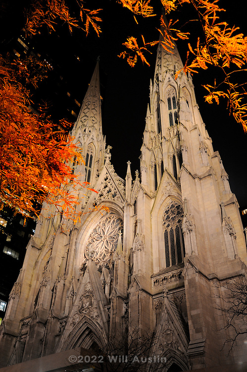 St. Patrick's Cathedral at night with Fall leaves in New York, New York, USA