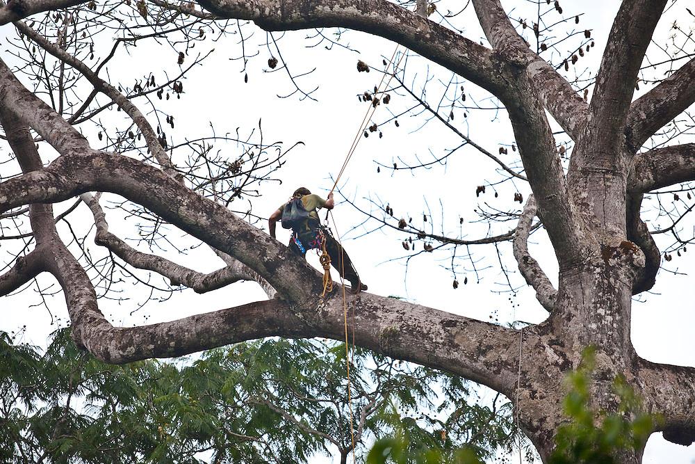 Parauapebas_PA, Brasil...Programa de Conservacao do Gaviao Real  (Harpia harpyja) na Floresta Nacional de Carajas, Para...Preservation Program of the Harpy Eagle (Harpy harpyja) at the National Forest of Carajas, Para. ..Foto: JOAO MARCOS ROSA / NITRO