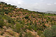 Ethiopia, Tigray region, Kola District. As part of the World Bank funded Sustainable Land Management Program, the whole community, men as well as women, work relentlessly to prevent erosion and land degradation by planting local species of trees with the Great Green Wall program.