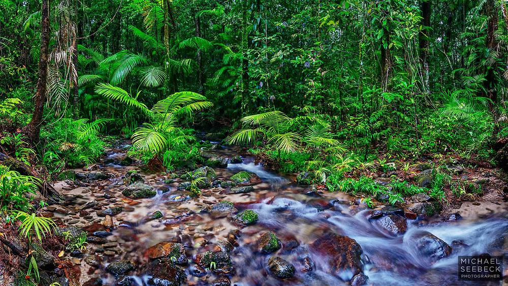 A wet season stream courses through pristine tropical rainforest near Mossman Gorge.