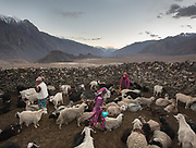 Sheep and goats in a coral. In Roshorv village.