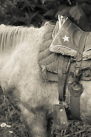 Black and white image of a horse and saddle. Peruvian Andes.
