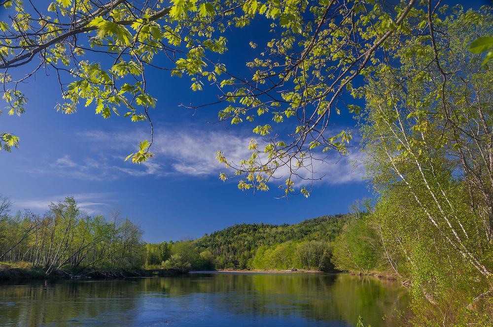 Pemigewasset river, spring greens, blue sky and clouds, Campton, NH