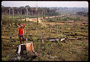 12: RUBBER TAPPERS CLEARCUT THREAT