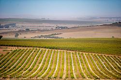 March 6, 2015 - Stellenbosch, Western Cape, South Africa - Stellenbosch, South Africa -winery and vineyards (Credit Image: © Edwin Remsberg/VW Pics via ZUMA Wire)