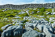 The Burren famous glaciated karst pavement landscape of limestone and dry stone walls, County Clare, West of Ireland
