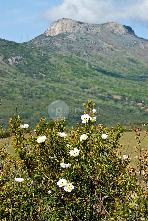 Parque Natural del Valle de Alcudia y Sierra Madrona. Ciudad Real ©Antonio Real Hurtado / PILAR REVILLA