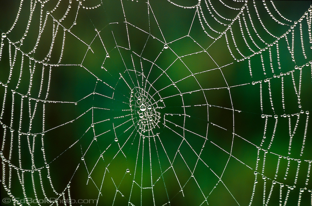 spider web covered with droplets of dew in early morning at Cade's Cove in Great Smokey Mountains National Park, TN, USA