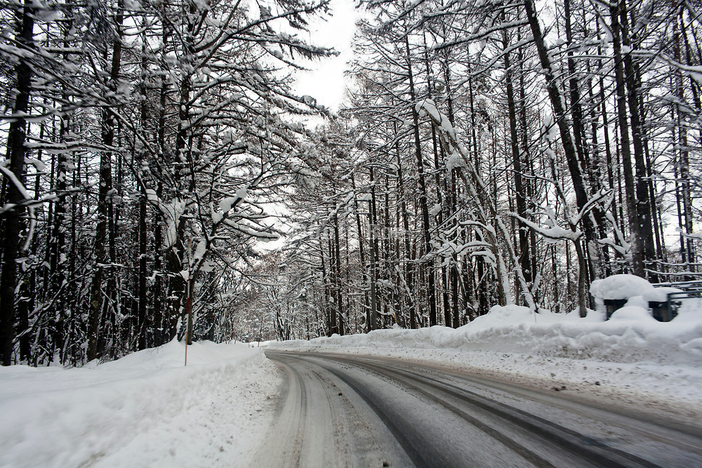 snow covered street with trees lining the road