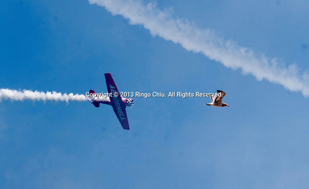 A seagull is seen as the Aeroshell Aerobatic Team practice for the Air and Water Show on Friday, August 16, 2013 in Chicago, Illinois.  (Photo by Ringo Chiu/PHOTOFORMULA.com)