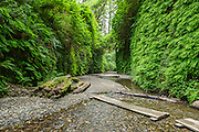 Fern Canyon is one of the most visitied, and incredible, places within the park. Imagine a cayon covered in ferns that you can walk through....amazing!
