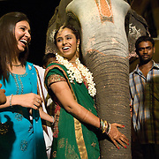The bride embraces the elephant on which the groom had arrived with the baraat of a Tamil Brahmin wedding in south India