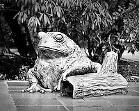 Bronze frog statue at Bellevue Botanical Gardens - crop bw