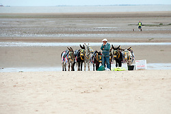 Close to Cleethorpes Leisure Centre Seaview Equestrian Centre Donkeys offers rides to the holiday makers on Cleethorpes Beach for £2.50..1 July 2012.Image © Paul David Drabble