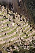 Rice terrace in the morning sun at Machu Picchu, Cusco Region, Urubamba Province, Machupicchu District in Peru, South America
