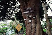 Pigs crossing sign, Hana Coast, Maui<br />