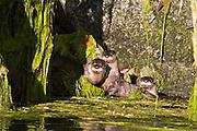wildlife photographer ,animal,travel,river otter,Canada,nature photography,
