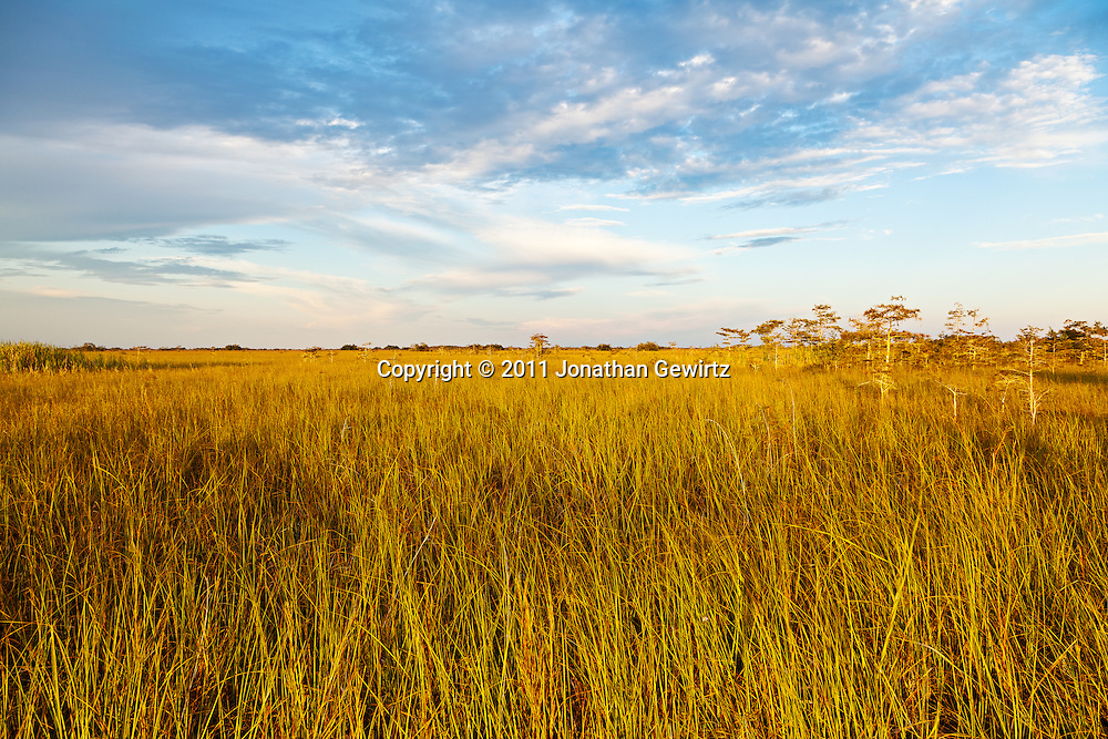 """Golden sunlight in the early morning on the """"River of Grass"""" sawgrass prairie in Everglades National Park, Florida. WATERMARKS WILL NOT APPEAR ON PRINTS OR LICENSED IMAGES."""