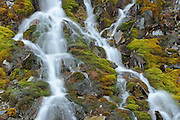 WAterfall alongside the Icefields Parkway near Hector Lake<br /> Banff NAtional PArk<br /> Alberta<br /> Canada
