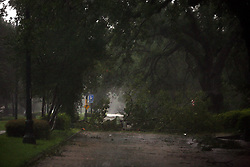 29 August 2012. New Orleans, Louisiana,  USA. <br /> Hurricane Isaac batters Uptown New Orleans on the 7th year anniversary of Hurricane Katrina.<br /> Photo Charlie Varley/varleypix.com