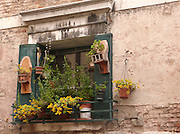 A window garden in Venice, Italy, where space is at a premium.