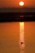 Bolsa Chica Wildlife Preserve At Sunrise