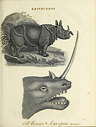 Rhinoceros (a new species [imaginary]) Copperplate engraving From the Encyclopaedia Londinensis or, Universal dictionary of arts, sciences, and literature; Volume XXII;  Edited by Wilkes, John. Published in London in 1827