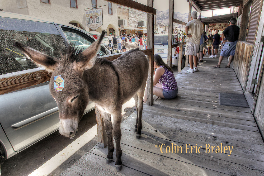 along Route 66 in Arizona, Aug. 14, 2011. Colin E Braley/wildwest-media.com