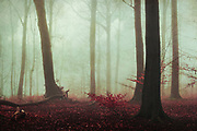 Moody forest scene on a January morning - textured photograph