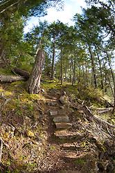 Stone stairs built into trail on west side of Jones Island, Jones Island State Park, San Juan Islands, Washington, US