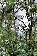 Verdant vegetation of Bellavista Cloud Forest Reserve, near Quito, Ecuador, South America.