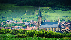The village of Westhoffen surrounded by vineyards in the foothills of the Vosges Mountains in Alsace, France.<br /> <br /> (c) Andrew Wilson   Edinburgh Elite media