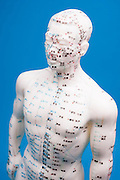front view of a male Chinese acupuncture model