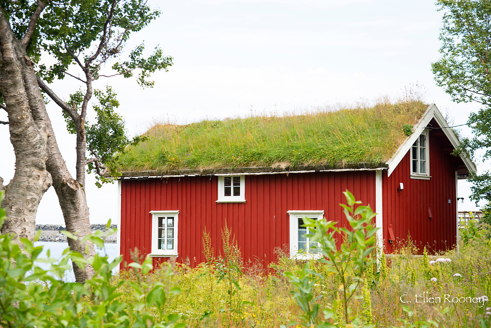 A turf covered rorbu in the fishing village of A, Lofoten Islands, Norway