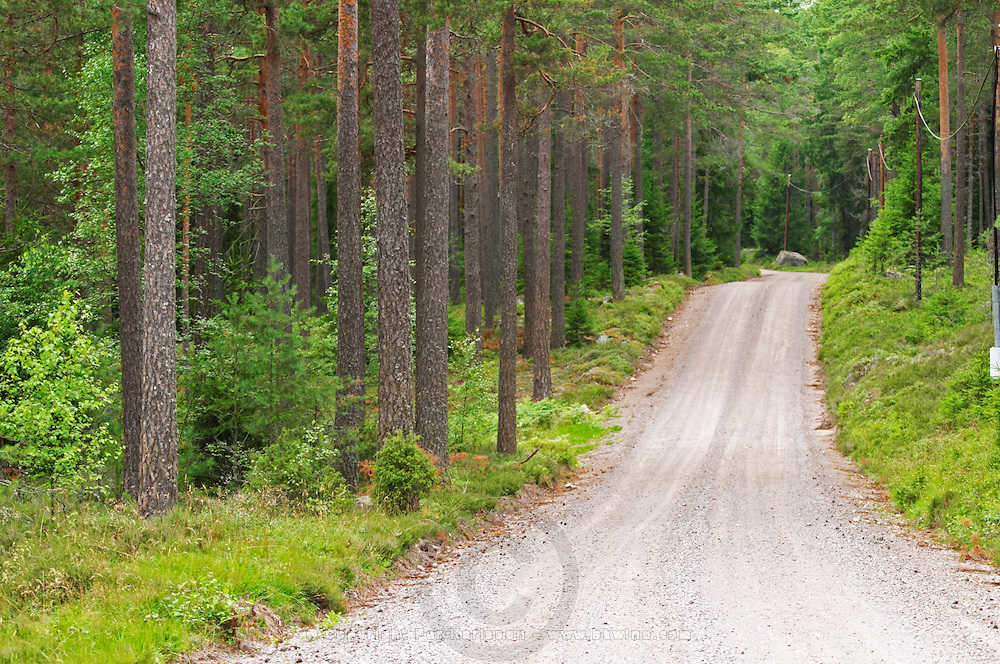 Country road. Through the forest. Smaland region. Sweden, Europe.