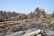 On May 23 2019, a forest fire devastated the village of Mevo Modiim, Israel. The burnt surrounding Eshtaol forest