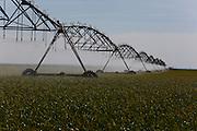 Sao Gotardo_MG, 23 de maio de 2015<br /> <br /> Fotos dos produtores de alho na regiao de sao gotardo.<br /> <br /> Foto: MARCUS DESIMONI / NITRO