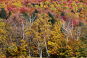 Colorful autumn trees, Stowe, Vermont, USA.