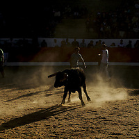 Local men in the arena with the bull during the main event