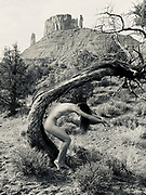 Black and white photo of a nude, woman crouching undre a tree in the Professor Valley, Moab, Utah