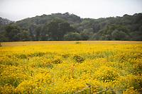 Lost Gardens of Heligan wildflower meadow  photo by Brian Jordan