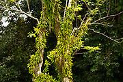 Tropical Vegetation, Seychelles