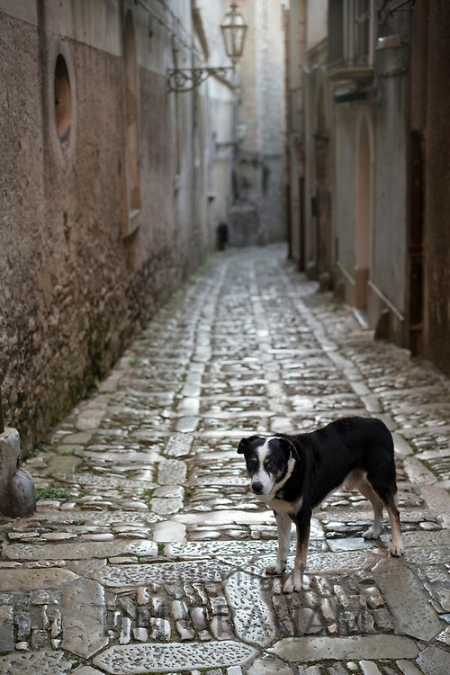 Dog standing on stone cobbles on guard in cobbled street alleyway in Erice, Sicily, Italy