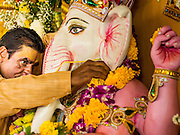 "09 SEPTEMBER 2013 - BANGKOK, THAILAND:  A Hindu priest in Bangkok, Thailand, anoints a statue of Ganesha during Ganesha Chaturthi services at Shiva Temple. Ganesha Chaturthi also known as Vinayaka Chaturthi, is the Hindu festival celebrated on the day of the re-birth of Lord Ganesha, the son of Shiva and Parvati. The festival, also known as Ganeshotsav (""Festival of Ganesha"") is observed in the Hindu calendar month of Bhaadrapada. The date usually falls between 19 August and 20 September. The festival lasts for 10 days, ending on Anant Chaturdashi. Ganesha is a widely worshipped Hindu deity and is revered by many Thai Buddhists. Ganesha is widely revered as the remover of obstacles, the patron of arts and sciences and the deva of intellect and wisdom.    PHOTO BY JACK KURTZ"