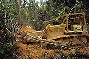 LOGGING, MALAYSIA. Sarawak, Borneo, South East Asia. Tropical rainforest and one of the world's richest, oldest eco-systems, flora and fauna, under threat from development, logging and deforestation. Home to indigenous Dayak native tribal peoples, farming by slash and burn cultivation, fishing and hunting wild boar. Home to the Penan, traditional nomadic hunter-gatherers, of whom only one thousand survive, eating roots, and hunting wild animals with blowpipes. Animists, Christians, they still practice traditional medicine from herbs and plants. Native people have mounted protests and blockades against logging concessions, many have been arrested and imprisoned.